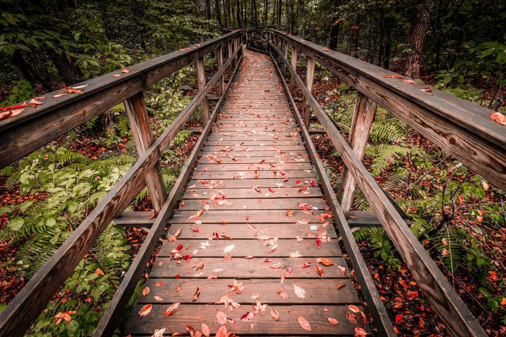 Boardwalk at the Wildlife Observation Center. Photo by Kurtis Chiappone
