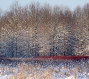 Landscape - Second place: Jim Mulvey, Wintry Wonder