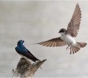 Birds - Second place: Carol Duffy