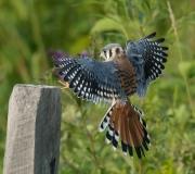 Birds - Honorable mention: Chuck Hantis
