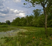 Landscape - Honorable mention: Richard Harris
