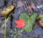 Plants - Second place: Susan Neufeld
