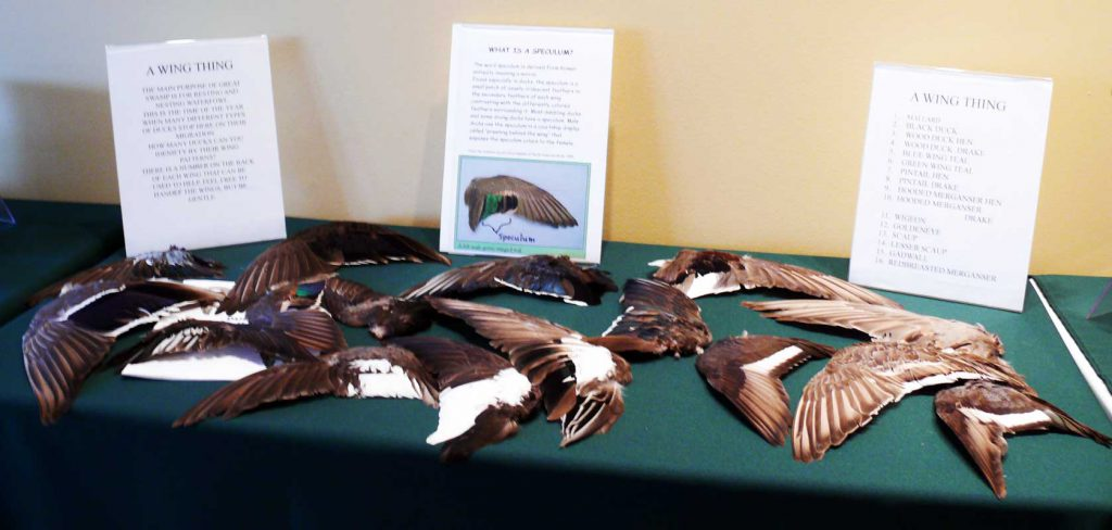 """It's a Wing Thing"" exhibit in the Discovery Den"